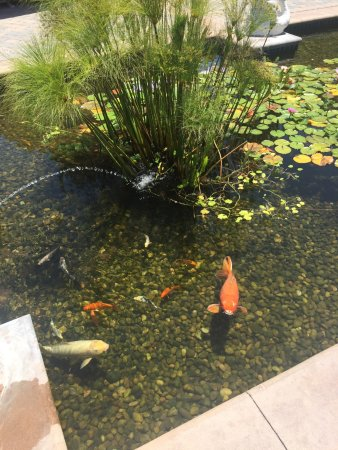 Marriott's Newport Coast Villas: Koi Pond