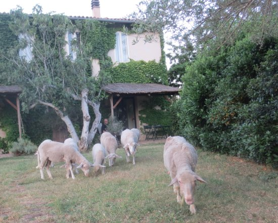 Tocco da Casauria, Italia: Friendly animals mowing the grass.