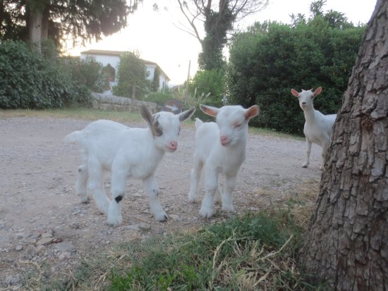 Tocco da Casauria, Italia: Friendly animals
