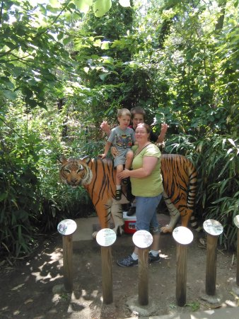 Img 20170627 112512 Foto Di Cincinnati Zoo Botanical Garden Cincinnati Tripadvisor