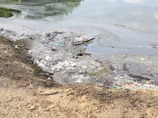 Middletown, OH: This park is getting gross