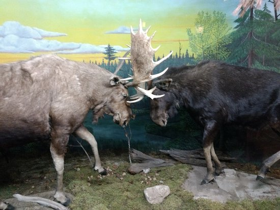 Gaylord, MI: Call of the Wild Museum