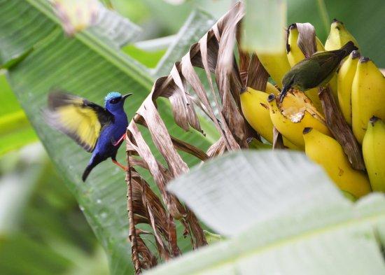 La Anita Rainforest Ranch: Bird watchers paradise, birds seen during lunch.