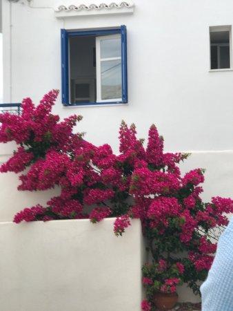 Naoussa, اليونان: photo0.jpg