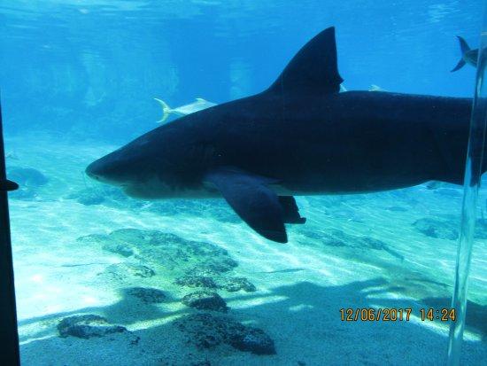 Main Beach, Australia: Sharks