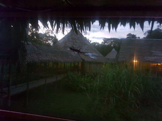 Cumaceba Amazon Lodge: detrás de la malla de la habitación...felizmente