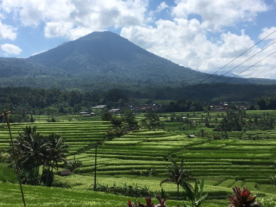 Jatiluwih Green Land: with mountain backdrop