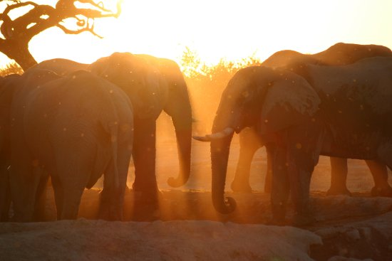 Maun, Botswana: Elephants at Dusk