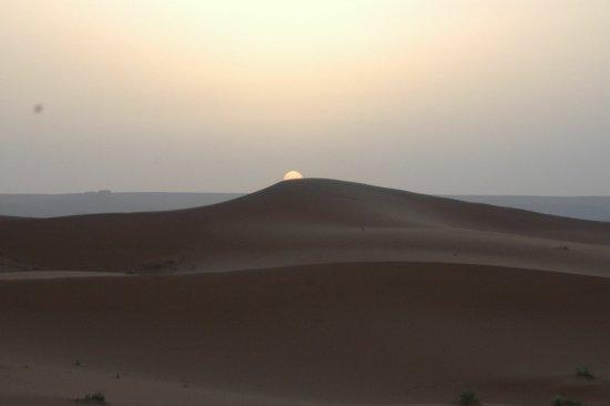 Sahara Garden: photo4.jpg
