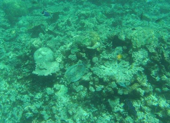 Makunudu Island Photo