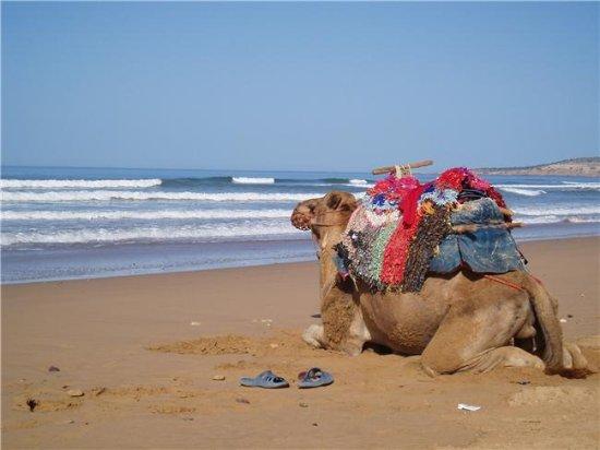 Morocco Trip Link