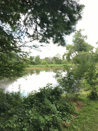 Kenilworth Park and Aquatic Gardens: At the beginning of the trails...