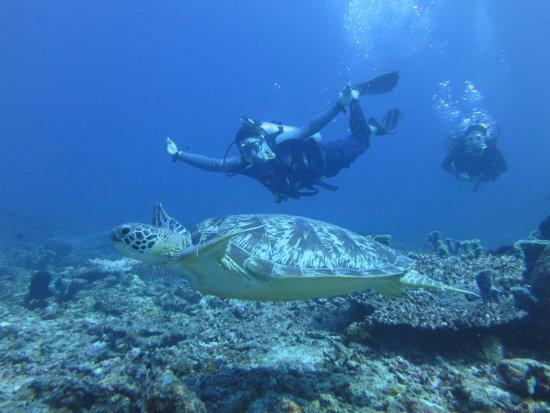Gili Joglo : Turtle Heaven!