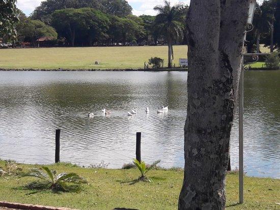 Lago da Praça Vitória Regia Holambra