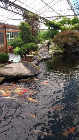 Naaldwijk, The Netherlands: garden