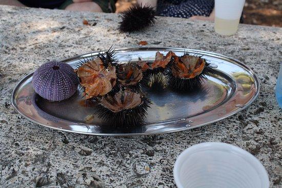 Captain's Villa Sokol: Fresh sea urchins