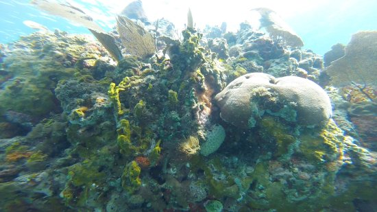 St. Kitts and Nevis: The reef at Bug's Hole.
