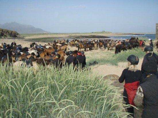 Borgarnes, Iceland: Horseback riding on the white beach of Löngufjörur