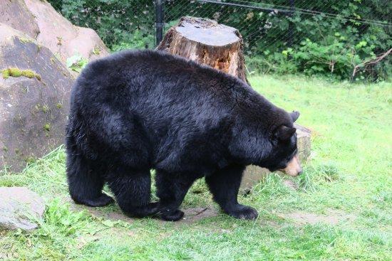 Oregon Zoo: Great bear habitat