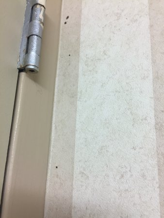 Linthicum Heights, MD: Black mold on walls- Not a good sign