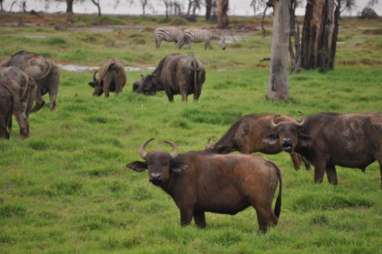 African Home Adventure Safaris