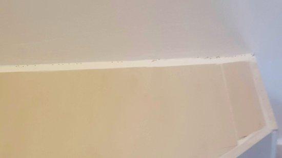 Grand Bourg, Guadeloupe: Des fourmis partout sur les plaintes des murs...