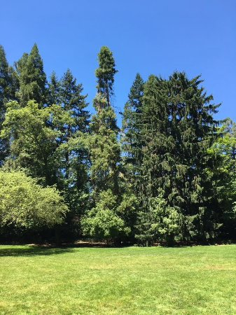 Lithia Park: Mixture of trees in the park