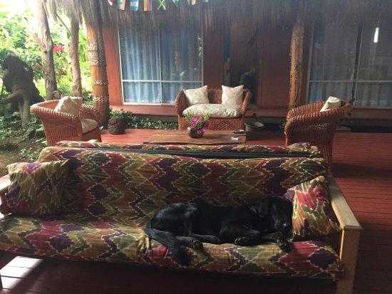 Kaimana Inn Hotel & Restaurant: Area comum do htl e Sultão tirando um cochilo
