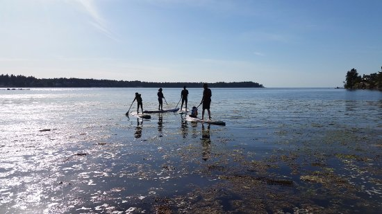 Walk On Water Paddle Board Rentals