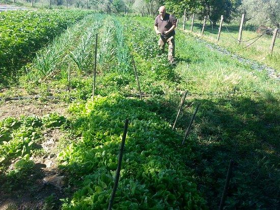 Agrotourism Il Bettarello: 20170508_101331_large.jpg