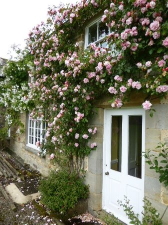 Matfen High House Bed and Breakfast: beautiful flowers and yard