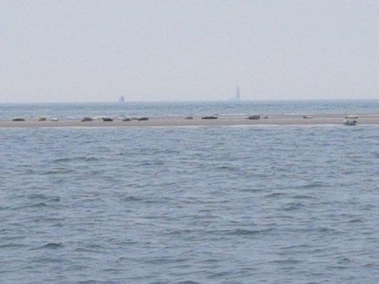 West-Terschelling, هولندا: Sleepnetvissen en zeehondentochten TS3-Viking