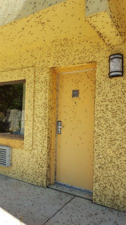 Best Western Port Clinton: Backdoor entrance into our room - Mayflies everywhere, yuk!