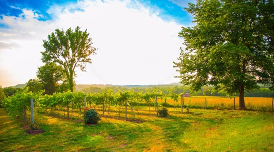 Marthasville, MO: The Vineyards