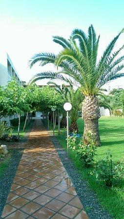 Hotel Eleftheria: Ogród