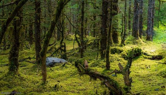 Mendenhall Glacier Rainforest and