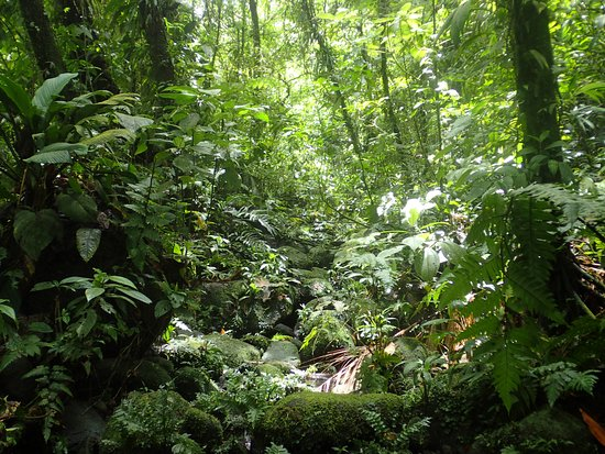 Parque Nacional Braulio Carrillo: Jungle