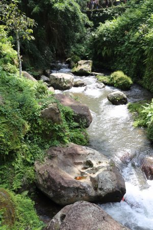 Mount Kawi: Lovely river valley
