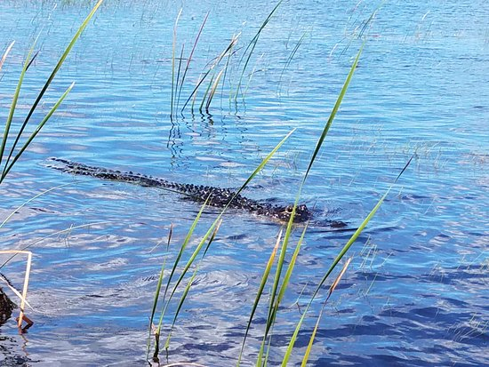 Weston, FL: He swam up to our boat