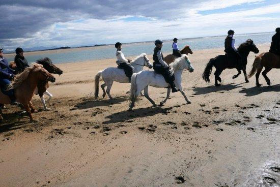 Borgarnes, IJsland: Horseback riding on the white beach of Löngufjörur