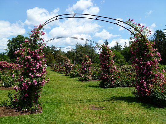 Elizabeth Park: stop & smell the roses