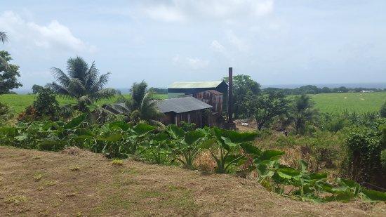 Capesterre-Belle-Eau, Guadeloupe: Distillerie de Rhum Longueteau et Karukera