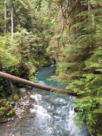 Quinault River-Pony Bridge Day Hike