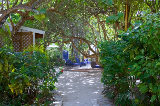 Paradise Beach Hotel : Tropical gardens, great shade and loungers to relax, take in the rays while you work on your Tan