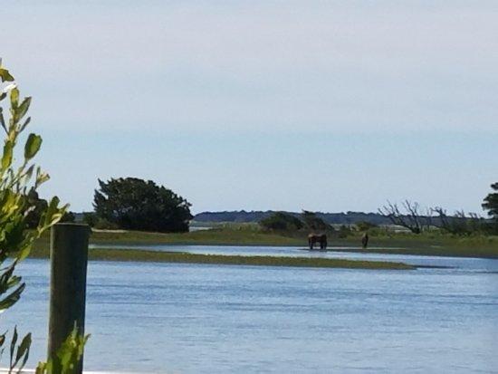 Beaufort, NC: 20170628_104236_large.jpg