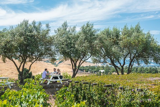 Viansa Winery and Italian Marketplace: Picnic table under olive trees