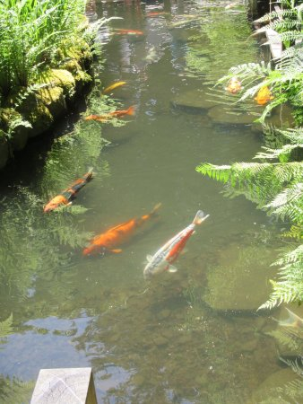 Koi pond picture of portland japanese garden portland for Japanese garden with koi pond
