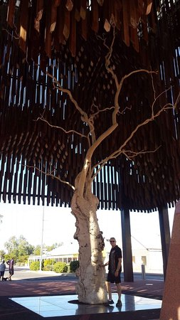 Barcaldine, Avustralya: Tree of knowledge!