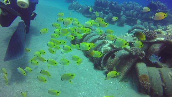 Ed Robinson's Diving Adventures: fish :)