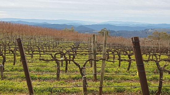 Benalla, Australia: Alpine region from Mt Bellevue vineyard